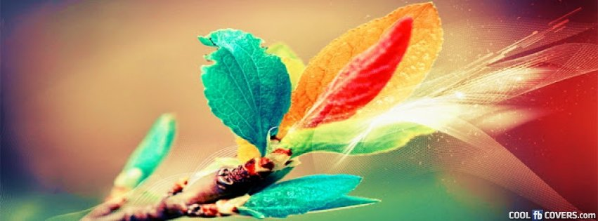 color branch coll fb cover facebook covers cool fb covers use
