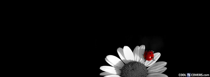 The Lonely Bug Over Sun Wallpaper Facebook Cover