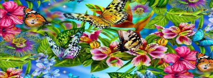 Butterflies And Flowers Facebook Covers