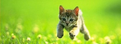 Cutie Cat Facebook Covers