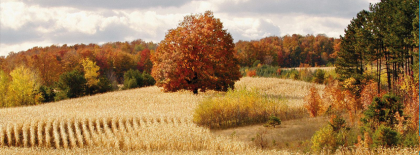 Fall Autumn Field Facebook Covers
