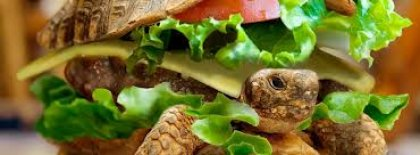 Burger Turtle Cover Facebook Covers