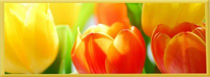 Flower Photo Light Effect Art Cover Facebook Covers
