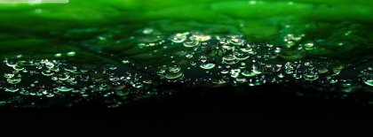 Dews In The Leaves Cover Facebook Covers
