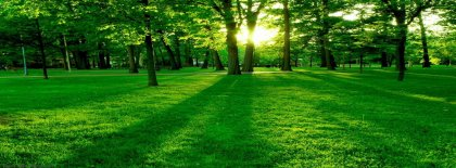 Evergreen Forest Fb Cover Facebook Covers