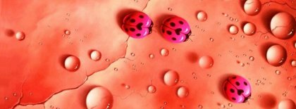 Pink Ladybugs Facebook Covers