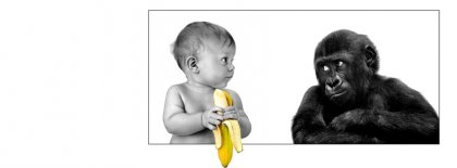 The Baby And Monkey Versus Facebook Covers