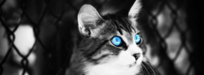 Blue Cat Eyes Facebook Covers