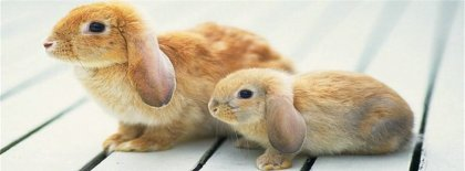 Cute Rabbits Facebook Covers