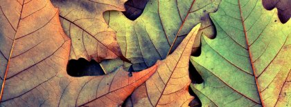 Autumn Leaves Facebook Covers