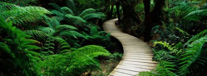 Path To The Wild Facebook Nature Facebook Covers